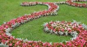 Бегония в саду
