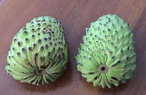 Плоды гравиолы