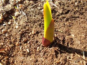 Гладиолусы - посадка и уход весной, хранение на зиму (видео инструкция)