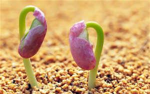 Пророщенные семена
