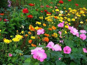 Какие многолетние цветы для дачи