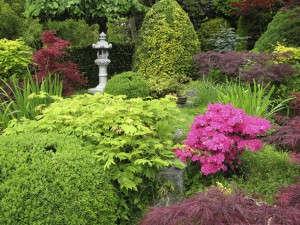 Кустарники в сад