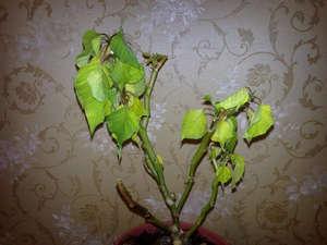 Обрезаный цветок