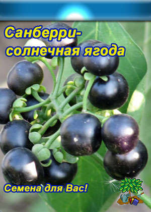 Ягода санберри