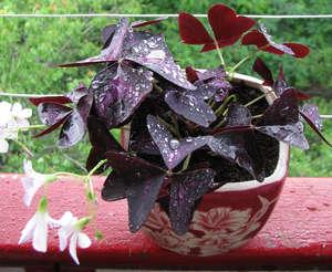 Увлажненные листья