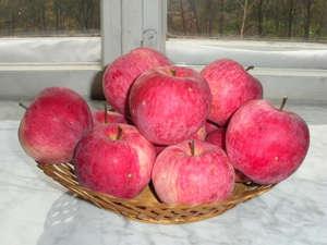 """Яблоки """"Мельба"""""""
