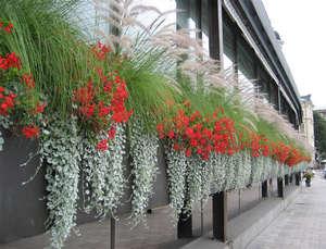 Озеление фасадов