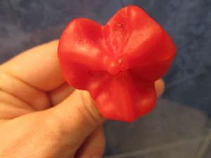 Плод перца Колокольчик