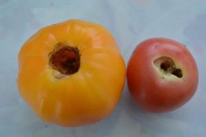 Выеденные томаты