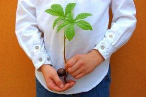 Однолетний росток