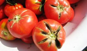 Растрескивание томатов