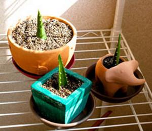 Размножение листом