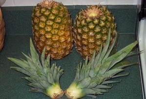 Срезанные верхушки ананаса