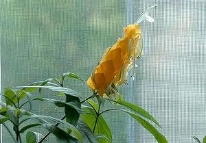 Вялый цветок