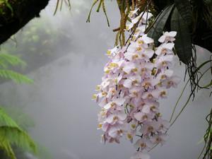 Цветы в природе