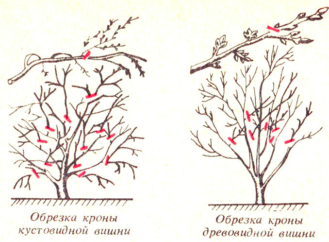 Два вида обрезки