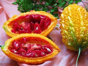 Плод в разрезе