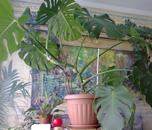 Растение в-квартире