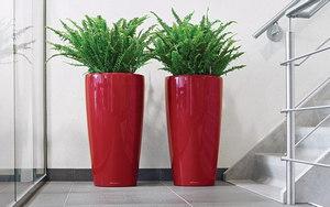 Растение в офисе