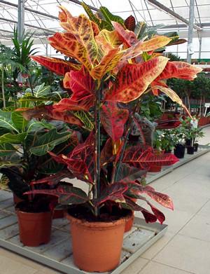 Растение в оранжерее