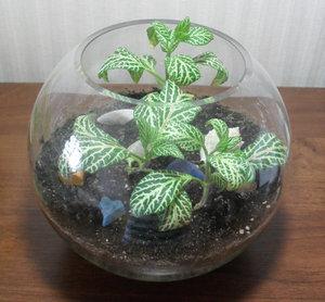 Аквариум c растением