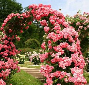 Арка цветочная