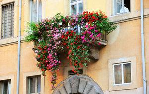 Вьющиеся розы на балконе