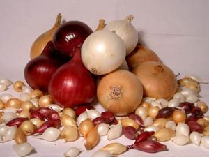 Луковицы и севок