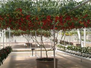 Выращивание на хайпонике