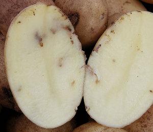 Картофель из хранилища