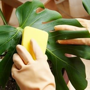 Промывание листьев