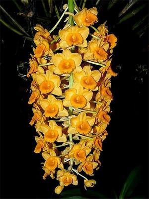 Густоцветковый