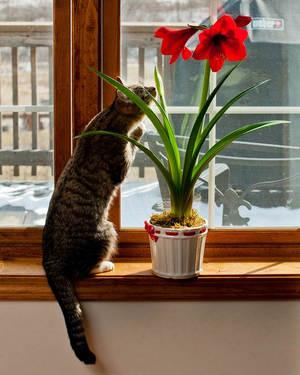 Кошка и цветок