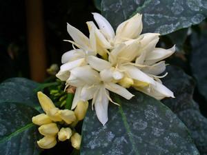 Два вида цветков