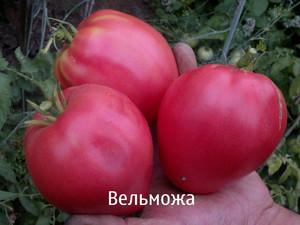 Плоды Вельможа