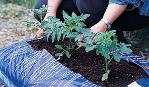Выращивание в мешках