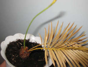 Высохшее растение
