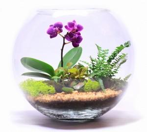 Орхидея и нефролепсис