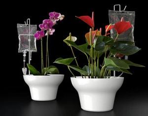 Автополив комнатных растений с помощью медицинских капельниц и пластиковых бутылок