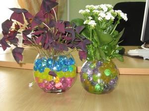 Растения в гидрогеле