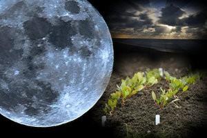Луна и посевы