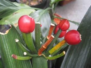 Плоды с семенами