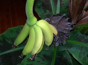 Первые плоды в доме