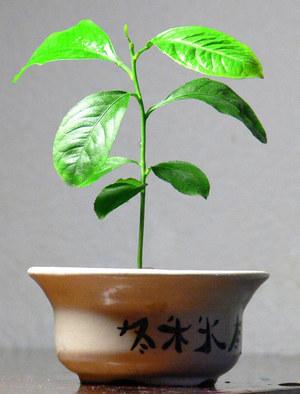 Растению 1 год