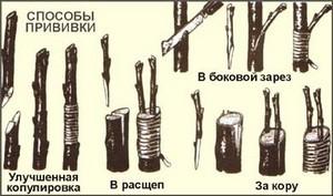 Разные виды