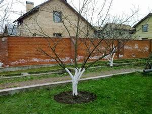 Правильно сформированное дерево